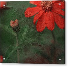 Red Passion... Acrylic Print by Juliana Nan