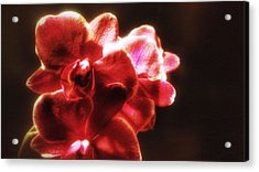 Acrylic Print featuring the photograph Red Phalaenopsis by Isabella F Abbie Shores FRSA