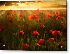 Red Poppies In The Sun Acrylic Print