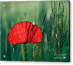 Acrylic Print featuring the photograph Red Poppy Flower by Jean Bernard Roussilhe