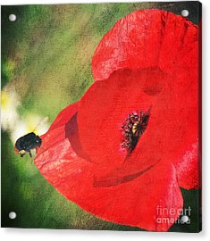 Red Poppy Impression Acrylic Print by Angela Doelling AD DESIGN Photo and PhotoArt