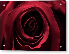 Acrylic Print featuring the photograph Red Red Rose 2 by Sheryl Thomas
