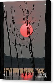 Red Rise Cormorants Acrylic Print by Roger Becker