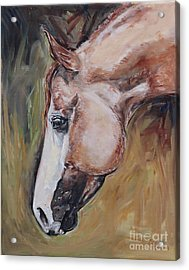 Red Roan Horse Acrylic Print
