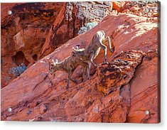 Red Rock Scramble    Acrylic Print by James Marvin Phelps