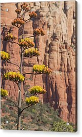 Red Rocks And Century Plant Acrylic Print
