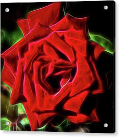 Red Rose 1a Acrylic Print