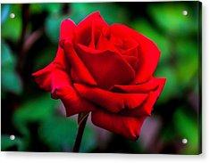 Red Rose 2 Acrylic Print by Az Jackson