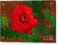 Red Rose 2 Acrylic Print by Jean Bernard Roussilhe