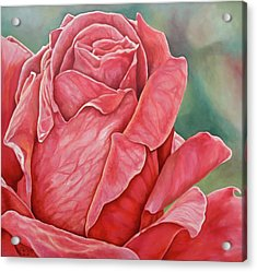 Red Rose 93 Acrylic Print