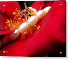 Red Rose And Pearls 1 Acrylic Print by Evguenia Men