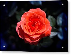 Red Rose Art Acrylic Print