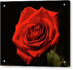 Red Rose At Night Acrylic Print