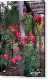 Red Rose Dream Acrylic Print