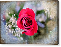 Red Rose Elegance Acrylic Print