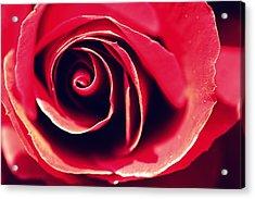 Red Rose Acrylic Print by Joseph Skompski