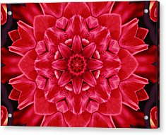 Red Rose Kaleidoscope Acrylic Print by Cathie Tyler