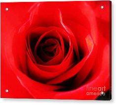 Red Rose Acrylic Print by Nina Ficur Feenan