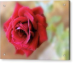 Red Rose Of Love 3651_2 Acrylic Print by S Art