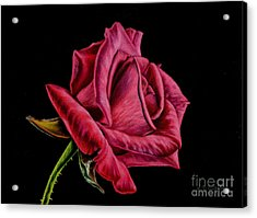 Red Rose On Black Acrylic Print by Sarah Batalka