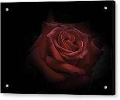 Acrylic Print featuring the photograph Red Rose by Ryan Photography
