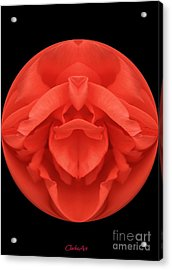 Red Rose Sphere Acrylic Print