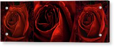 Red Rose Tryptych Acrylic Print by Nareeta Martin
