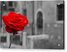 Red Rose With Black And White Background Acrylic Print by Michael Henderson