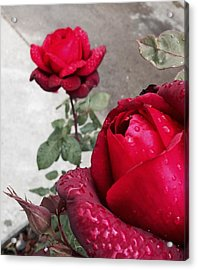 Red Roses Acrylic Print by Beverly Johnson