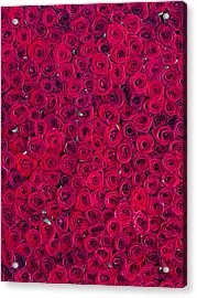 Red Roses Acrylic Print by Vitor Costa