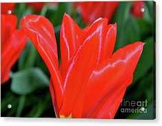 Red Satin Acrylic Print