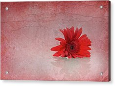 Red Scent Acrylic Print