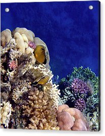 Red Sea Exotic World Acrylic Print