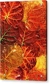 Red Sea Grapes By Sharon Cummings Acrylic Print by Sharon Cummings