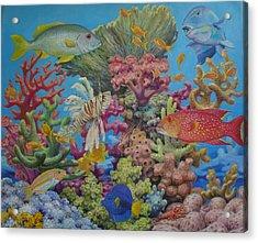 Red Sea Reef Acrylic Print by Henry David Potwin