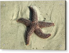 Red Sea Star Acrylic Print