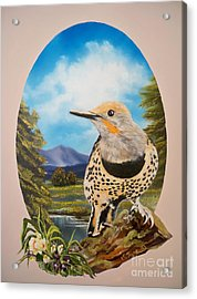 Flying Lamb Productions                       Red Shafted Flicker Acrylic Print