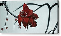 Red Silk Cotton Flower Acrylic Print by Jennifer Watson