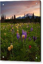 Red Sky Meadow Acrylic Print by Mike  Dawson