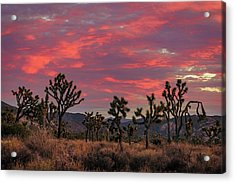 Red Sky Over Joshua Tree Acrylic Print