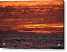 Red Sky  Acrylic Print by Wendy  Coloma