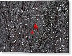 Red Snow Acrylic Print by Bill Stephens