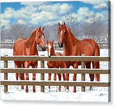 Red Sorrel Quarter Horses In Snow Acrylic Print