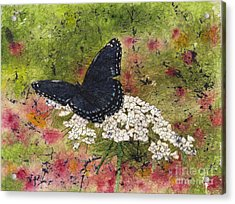 Red Spotted Purple Butterfly Queen Annes Lace Batik Acrylic Print