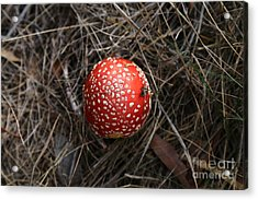 Red Spotty Toadstool Acrylic Print
