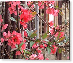 Red Spring Acrylic Print by David Du Hempsey