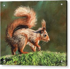 Red Squirrel On Branch Acrylic Print