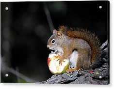 Red Squirrel Acrylic Print by Steven Scott