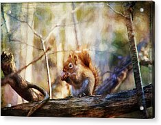 Red Squirrel With Pinecone Acrylic Print