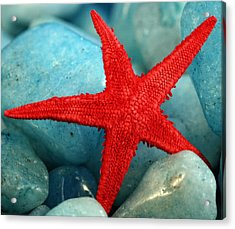 Red Starfish Acrylic Print by Gina Cormier